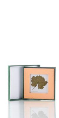 A leaf of the Old Vine - Mini